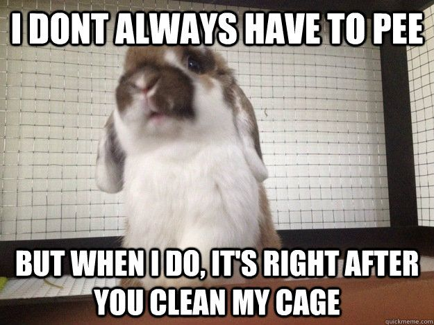 Rabbit Problems I Made This Because Callaway Constantly Pees