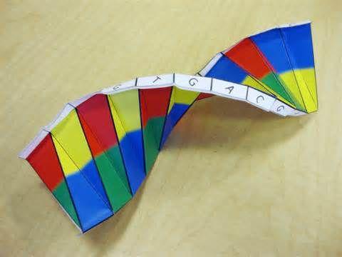 Origami Dna Unit Dna Pinterest