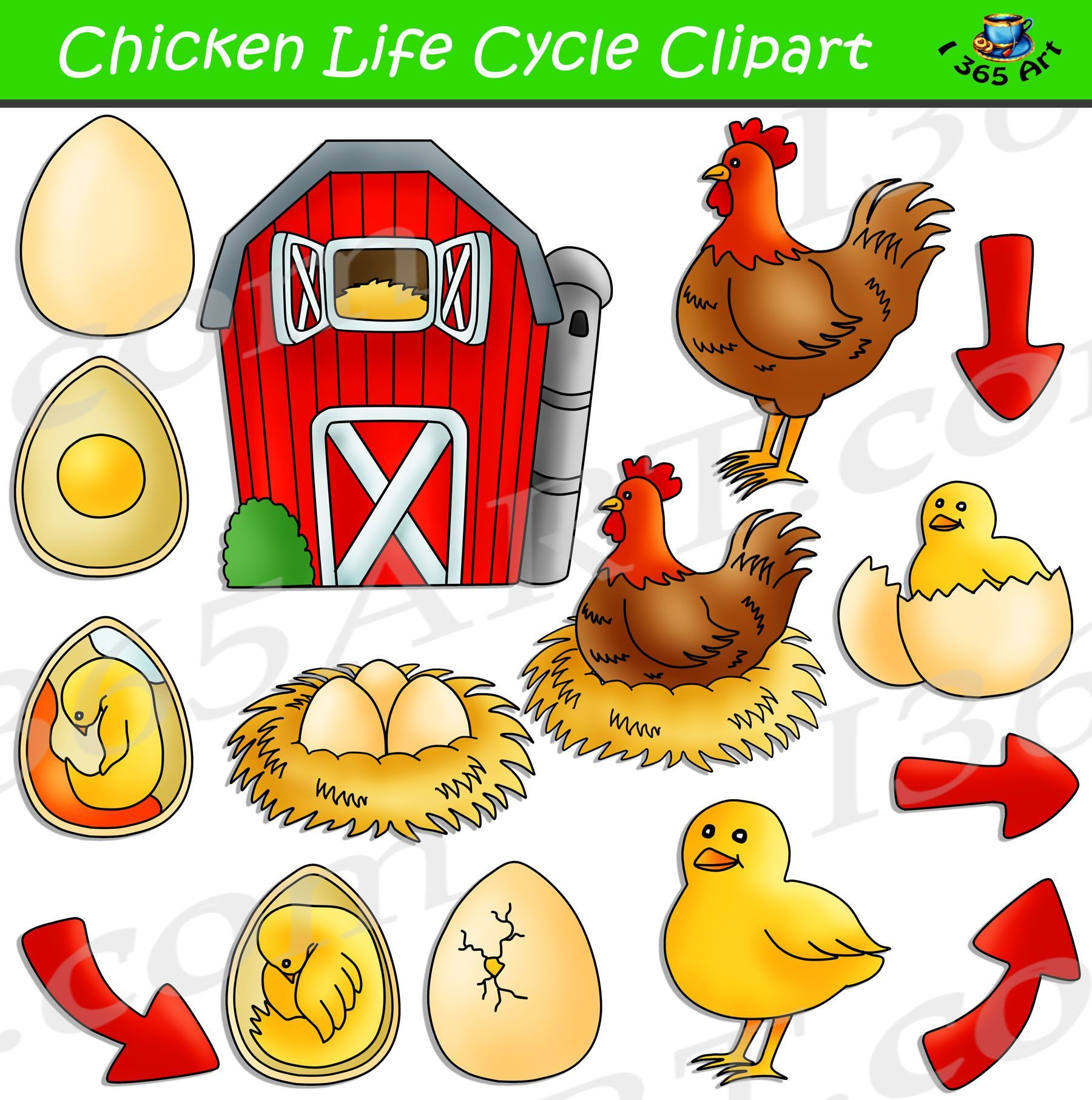 Kids Chicken Life Cycle Clipart Set