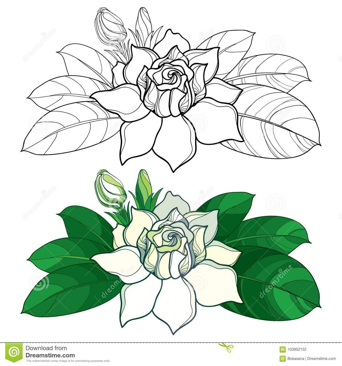 Vector Outline Gardenia Flower Bud And Ornate Leaves In Black And Pastel Color Isolated On White Background Stock Vec Flower Sketches Flower Drawing Drawings