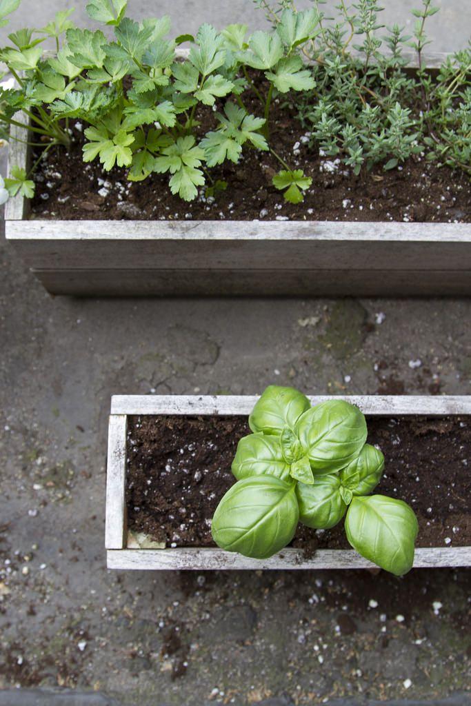 ec6d58e45df734c9e20aca3d2fd77867 - Use Of Tea Leaves In Gardening