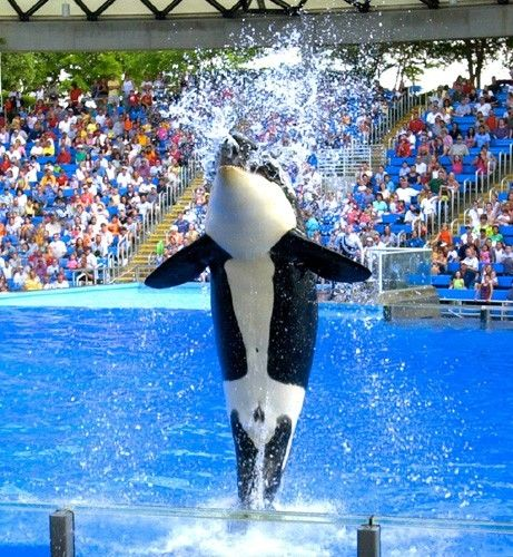 Best Places In Our Country: Sea World San Antonio {one Of Our Favorite Places To Visit