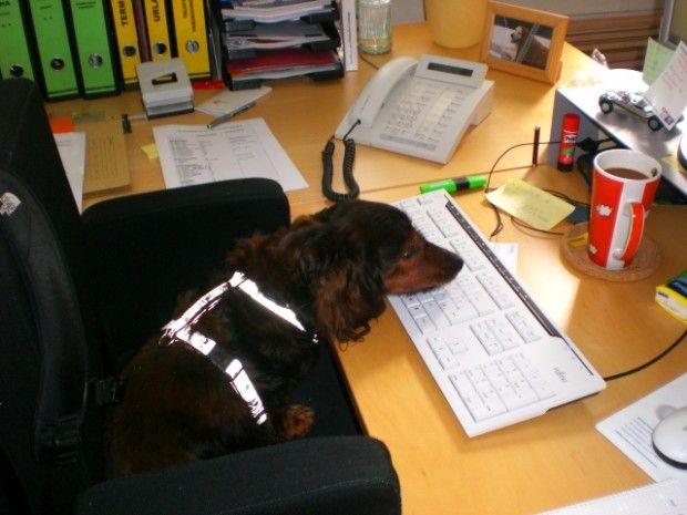 auch im büro einsetzbar....