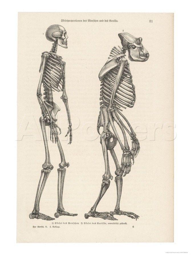 17-1743-Y5W3D00Z.jpg (670×894) | Anatomy | Pinterest | Anatomy and ...
