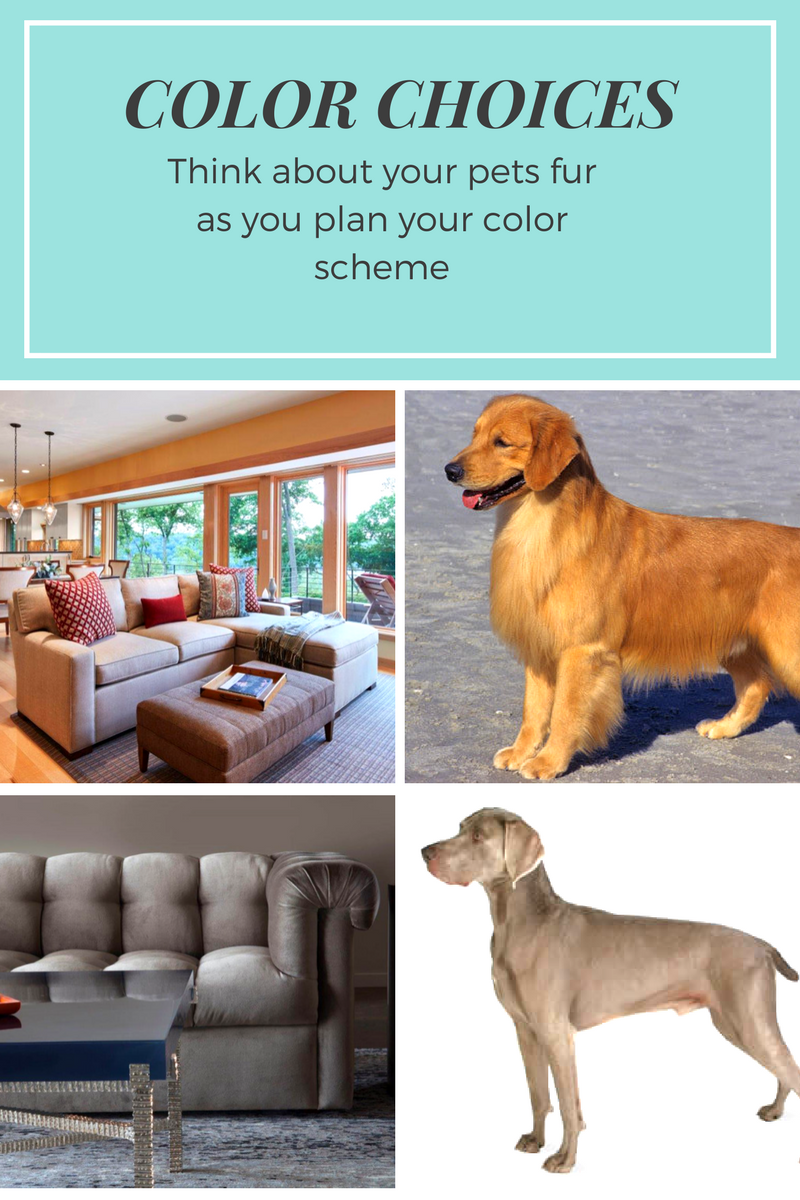 Pet Friendly Interior Design Advice According To Lilu Lilu Interiors Interior Design Advice Pet Friendly Furniture Pets