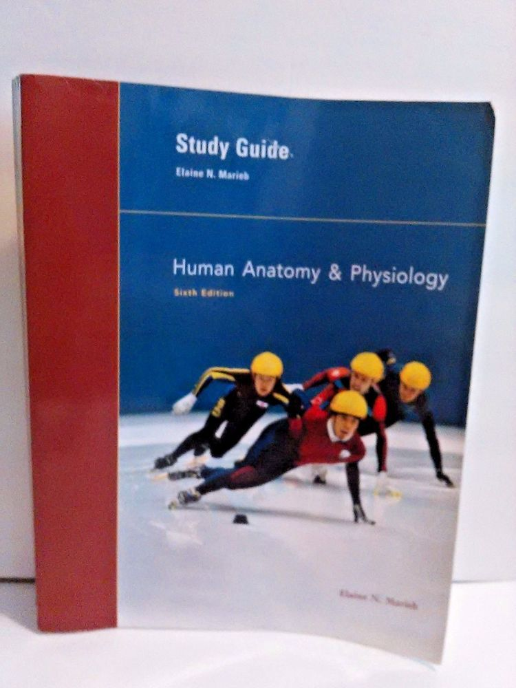 Study Guide For Human Anatomy And Physiology 6th Edition By Elaine
