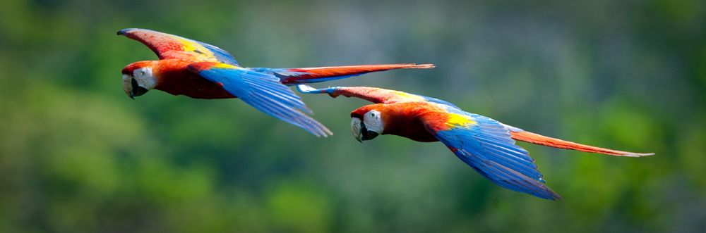 Wildlife Fight To Survive As Forests Burn Gallery Parrot Wildlife Macaw