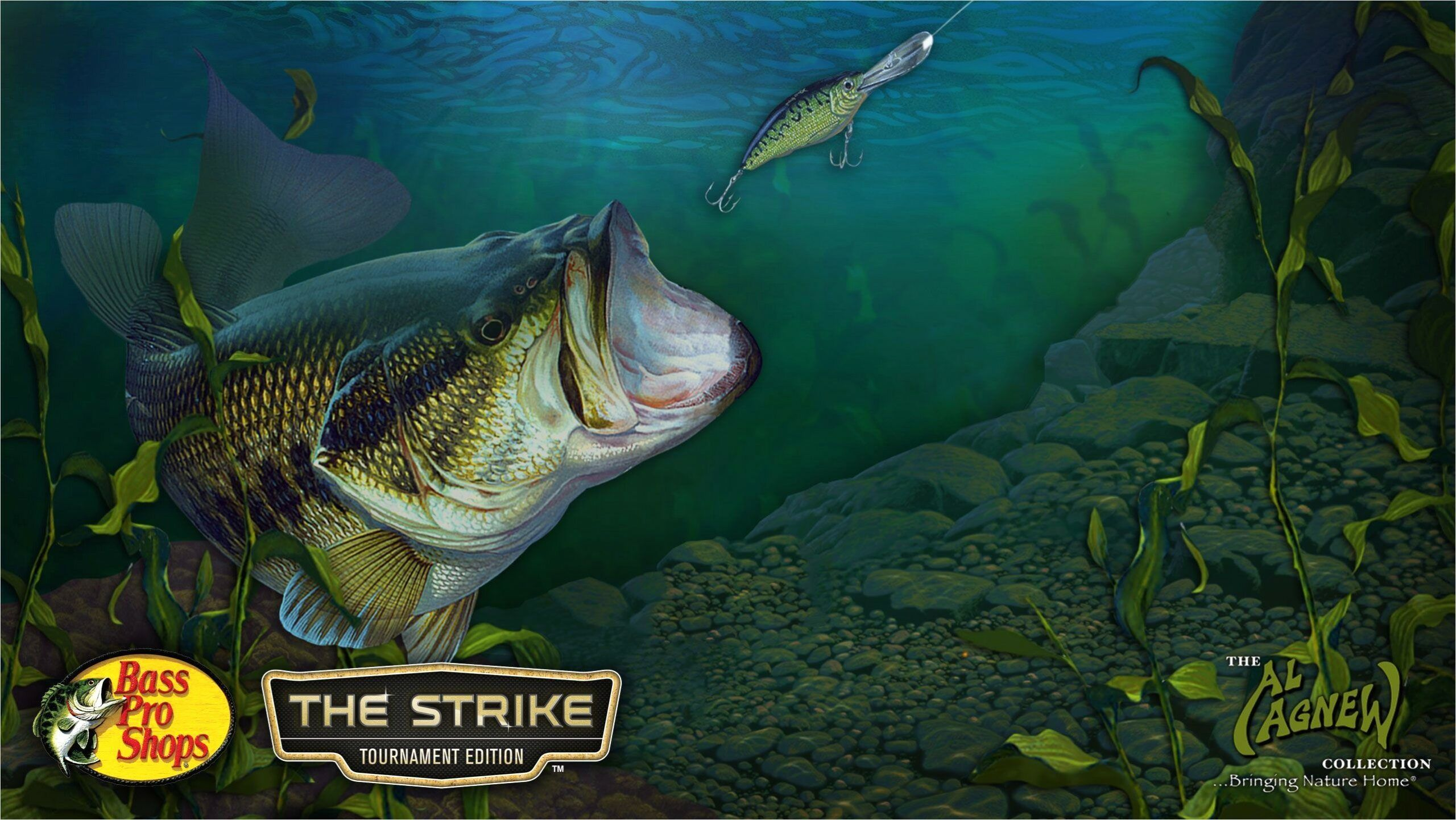 4k Bass Fishing Wallpapers In 2020 With Images Bass Fishing Fish Wallpaper Fish