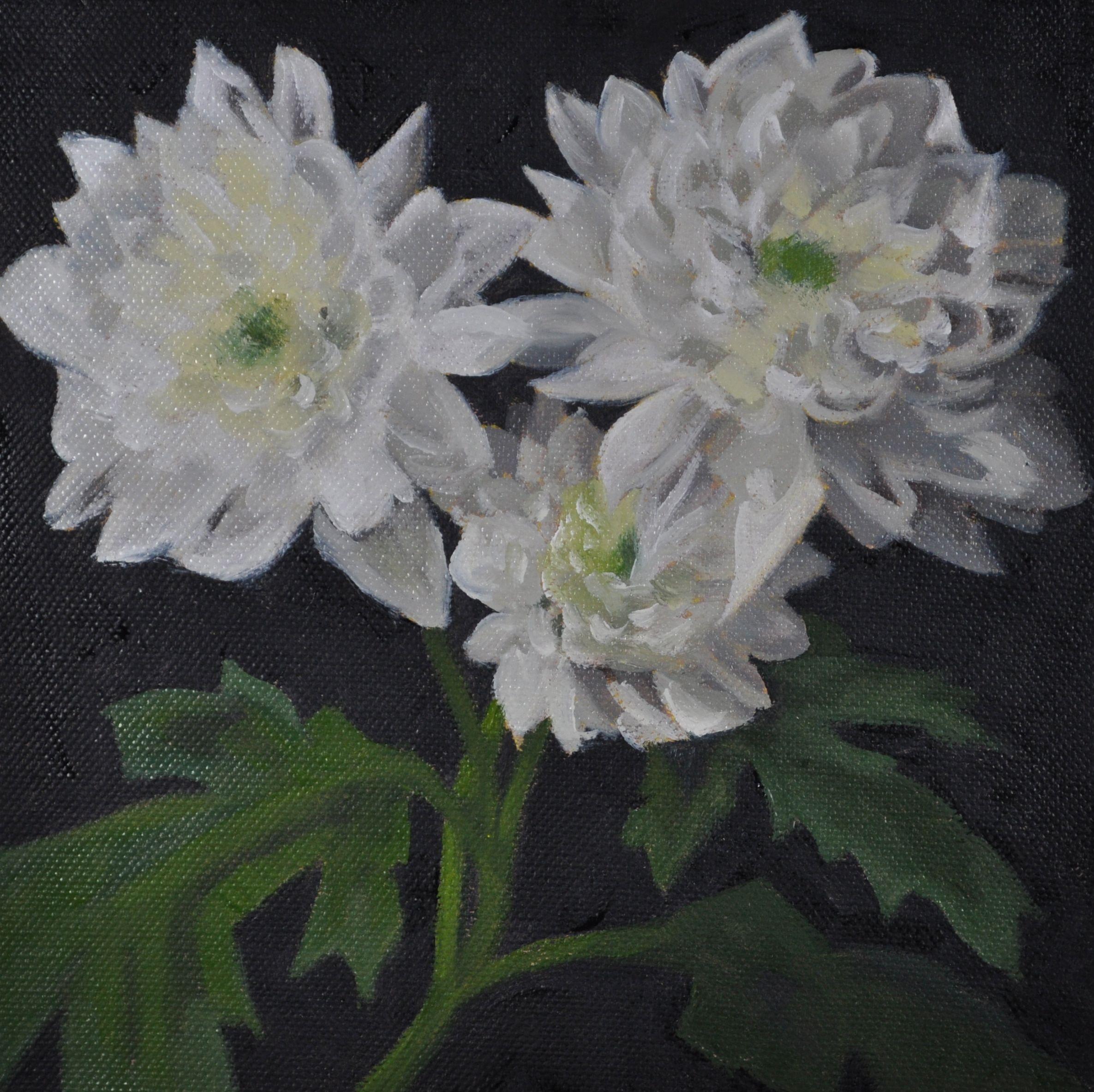 Alan Moir. Chrysanthemums - alanmoir.co.uk