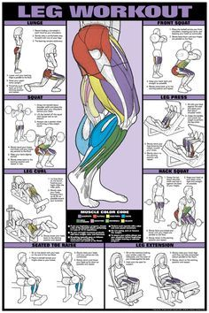 leg workout fitness chart coed  workout posters