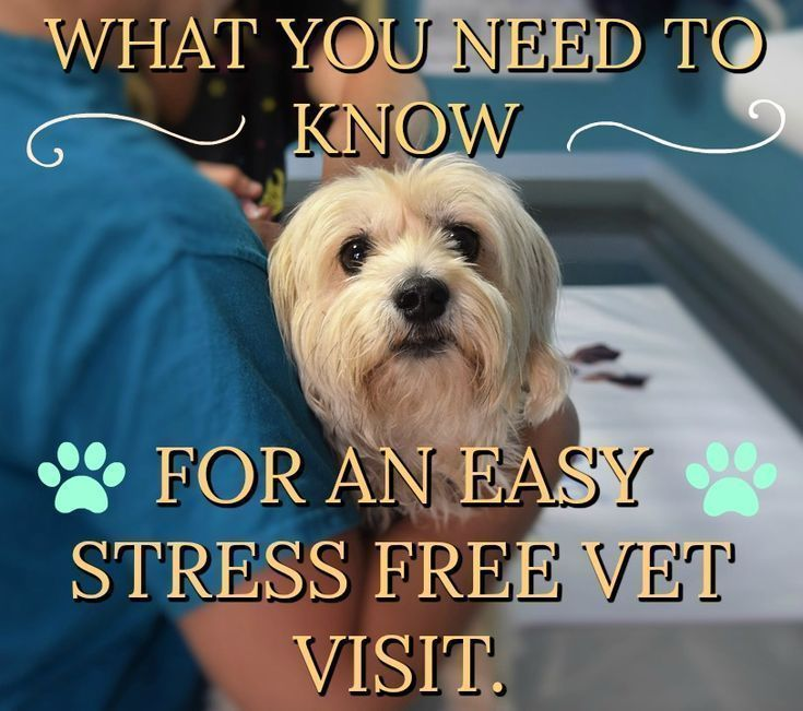 Taking the stress out of your vet visit From the heart