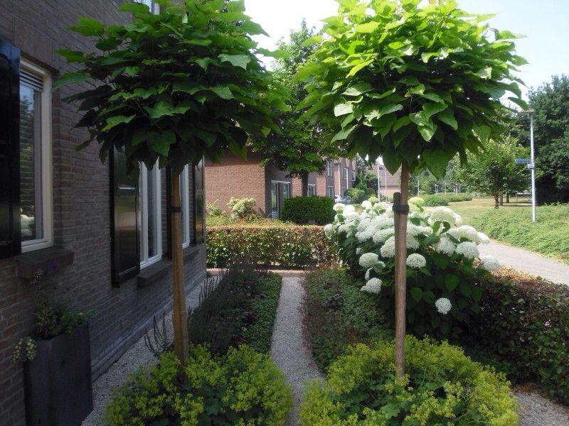 Voortuin hortensia achter haag garden in 2019 garden for Ontwerp voortuin met parkeerplaats