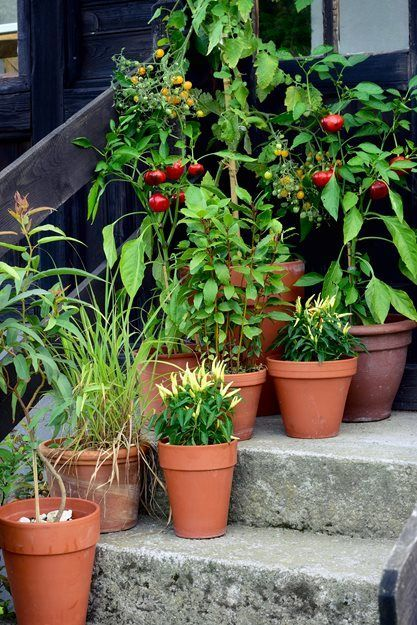 Container Vegetables, Small Space Vegetables Garden Design Calimesa
