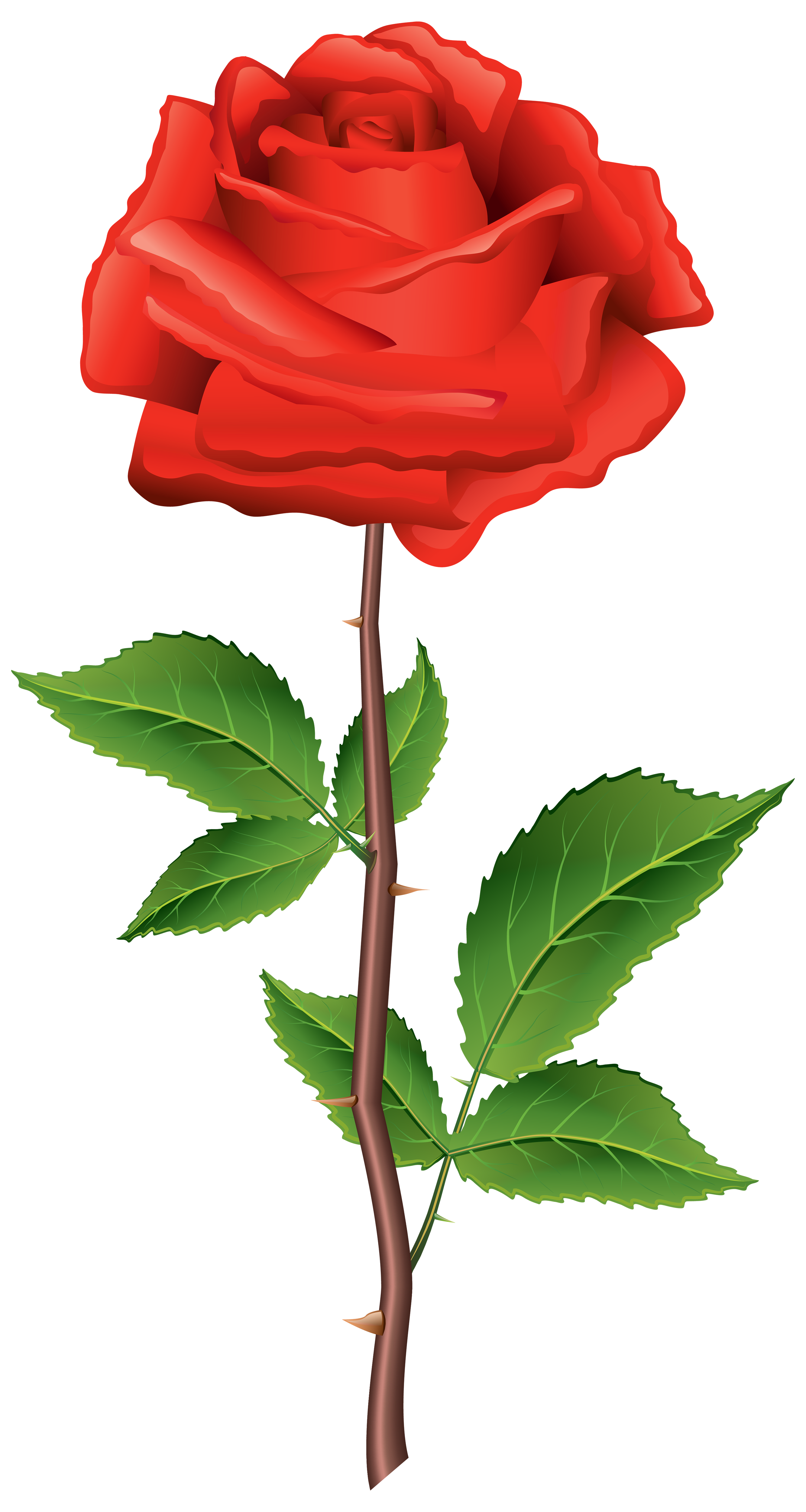Rose PNG image with transparent background Rosas, Rosas