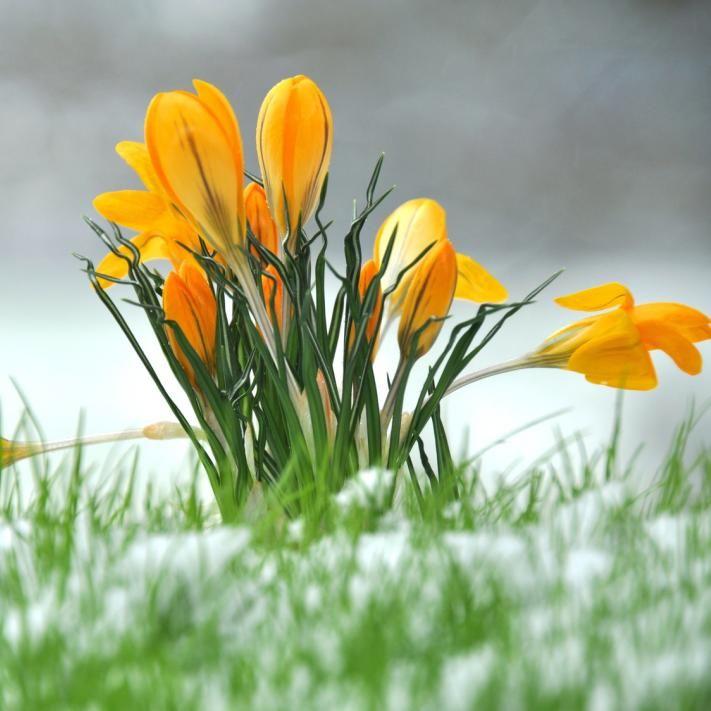 Pflanzen überwintern - gartenpflanzen winterhart immergrun