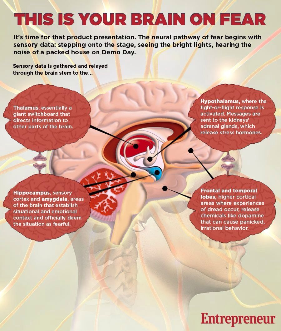 Science- your brain in fear   123-GAD   Pinterest   Brain ...