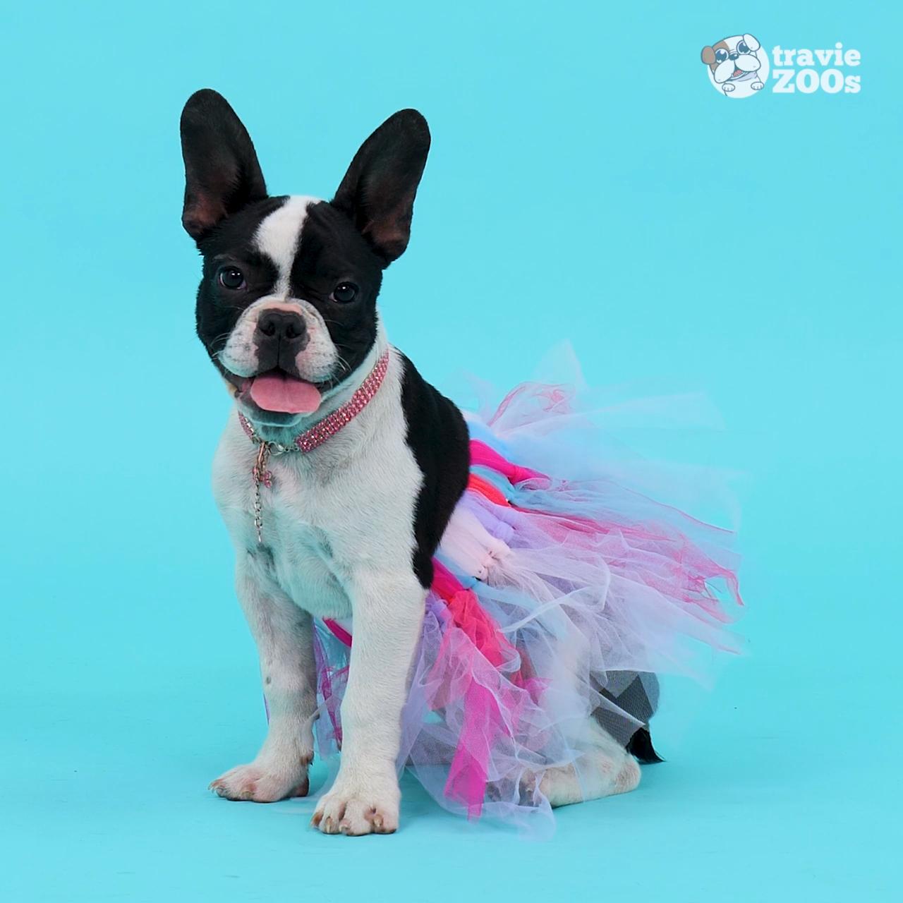Photo of Accesorios para mascotas de bricolaje 🐶 🐱