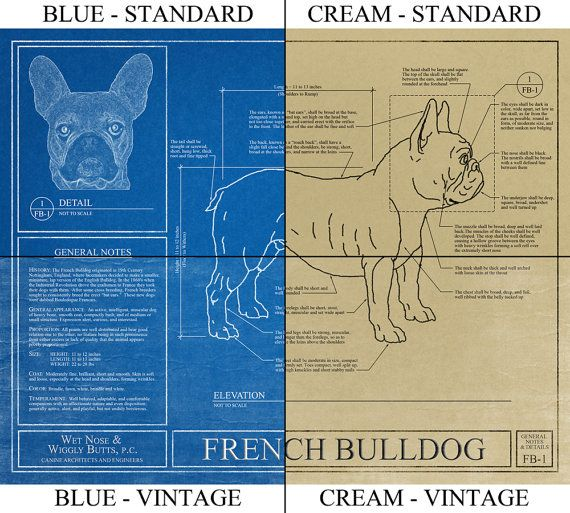Personalized labrador retriever blueprint labrador retriever art personalized labrador retriever blueprint by wetnosewigglybutts malvernweather Choice Image