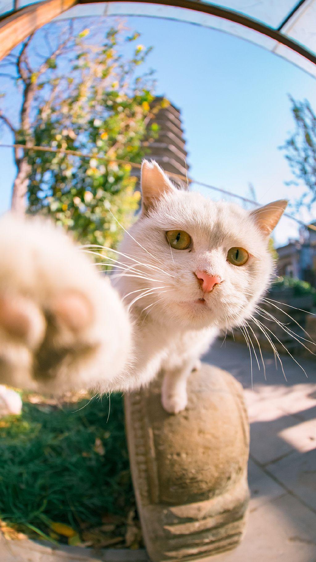 Let Me Take A Selfie Gatitos Lindos Gatos Animales Hermosos