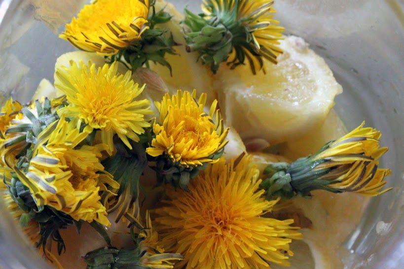Dandelion Liqueur Recipe Www Vallenuova It Dandelion Medicinal Wild Plants Edible Plants