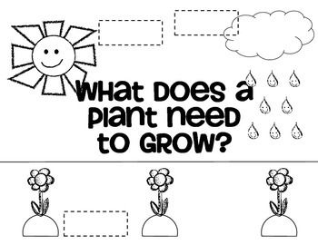 Plant Needs Worksheet Kindergarten