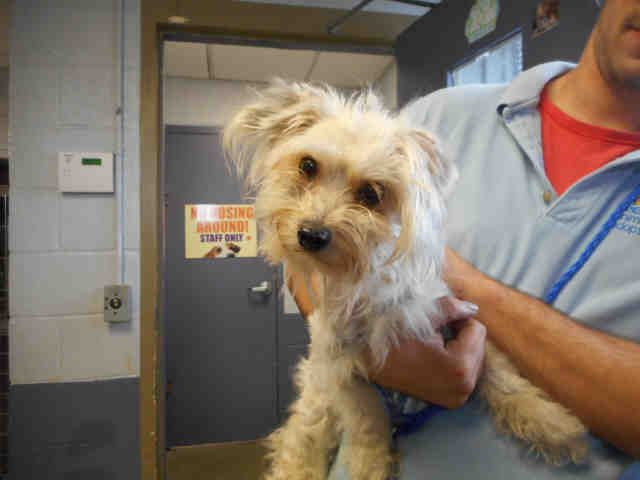 Maltese At Petharbor Com Animal Shelter Adopt A Pet Dogs Cats