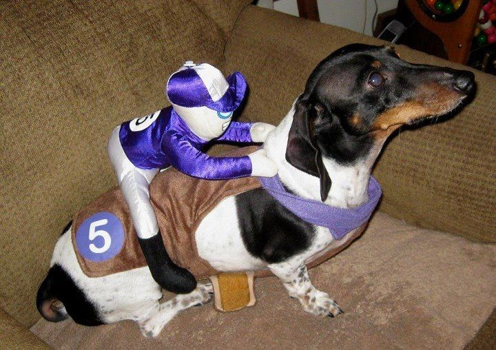 This Is Hilarious Love This Costume Dachshund Love Weenie