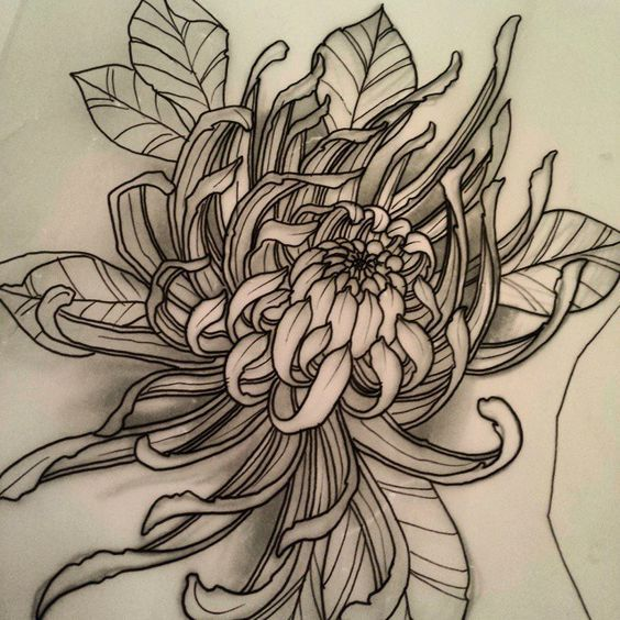 chrysanthemum tattoo sketch pictures to pin on pinterest tattooskid. Black Bedroom Furniture Sets. Home Design Ideas