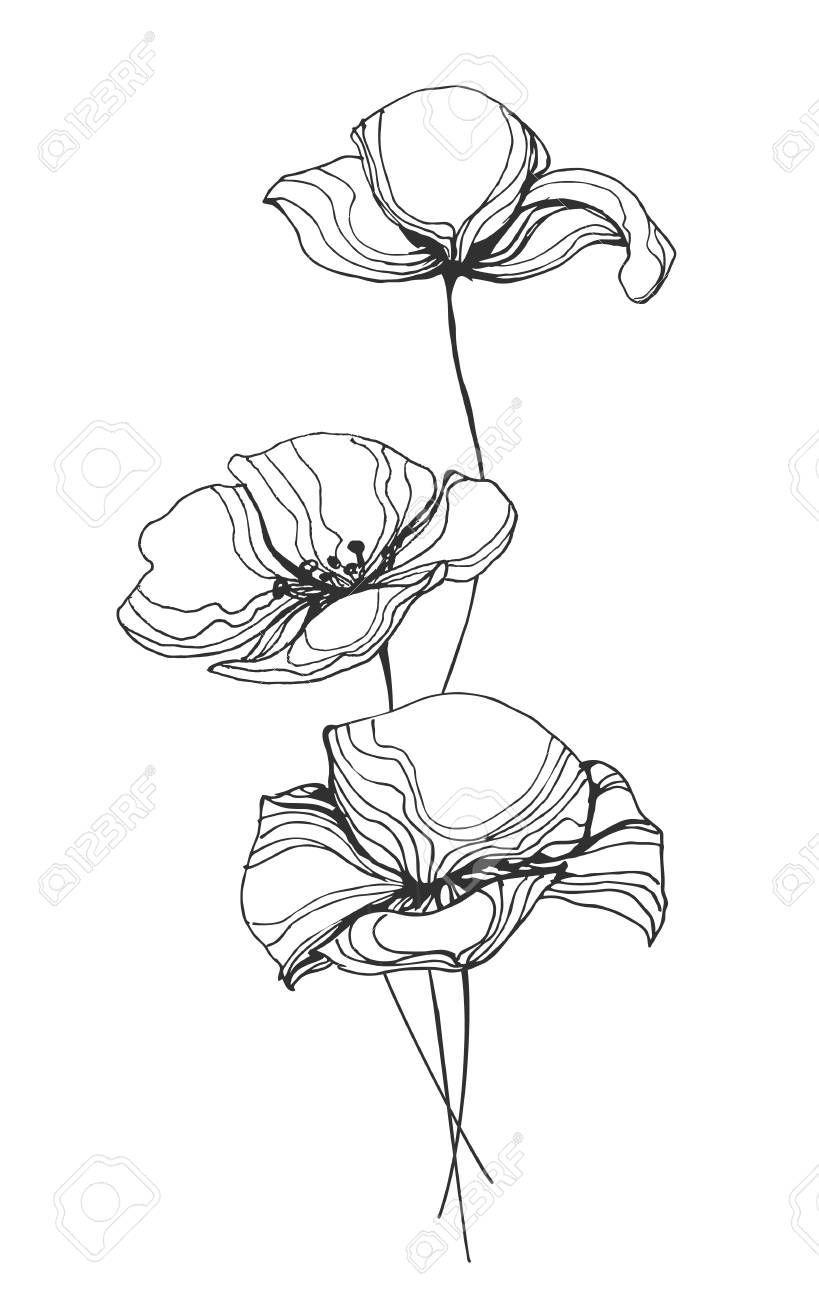 Poppy Flower Line Art Vector Illustration  #flower #illustration #poppy #vector