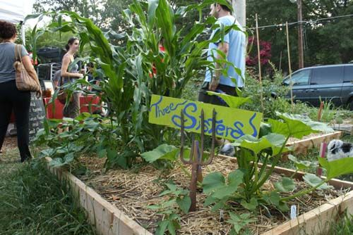 Companion planting is a great way to deter pests. The Three Sisters are a great way to start: corn, squash and beans.