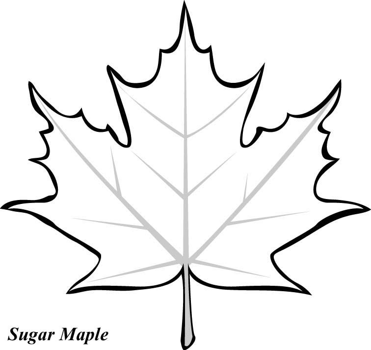 Leaf Printable Coloring Pages Piecing Pinterest Leaf Template