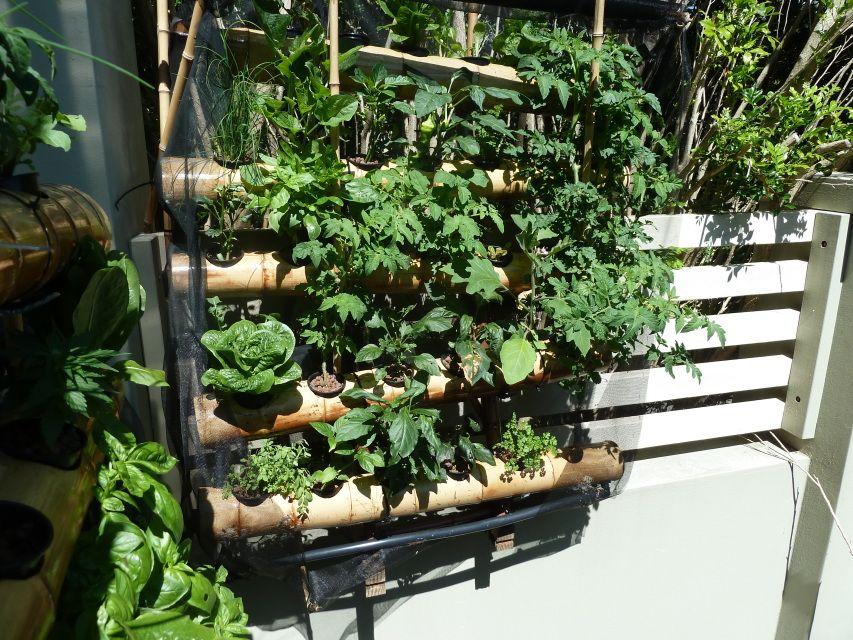 Inspiration for vegetable garden allotment. Inspiratie voor moestuin, tuincomplex