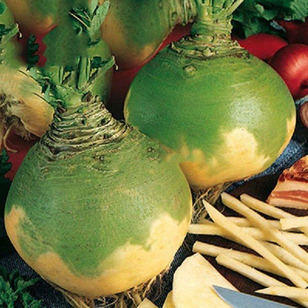 Amazon Com Best Garden Seeds Heirloom Swede Wilhelmsburger Rutabaga Green Top Vegetables 200 Seeds Organic Vegetables Organic Gardening Vegetables Seeds