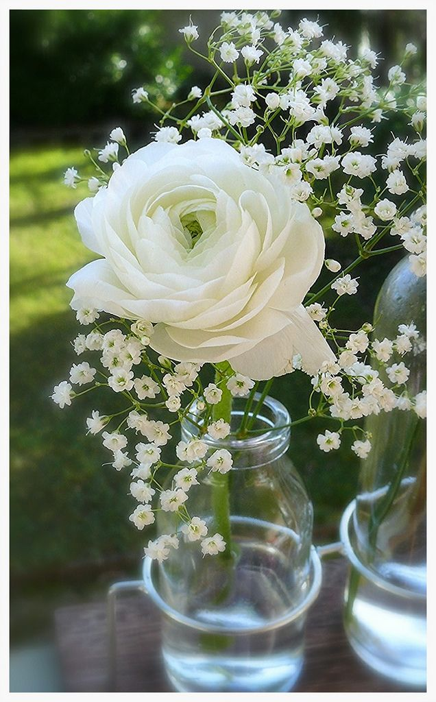 weie Ranunkel  Deko Blumen  Ranunkel Blumenstrau