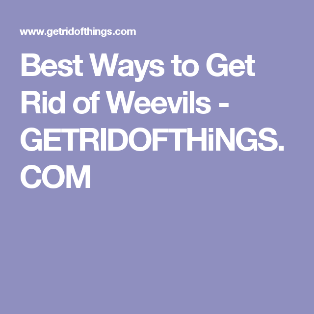 Best Ways To Get Rid Of Weevils Getridofthings Com Cat