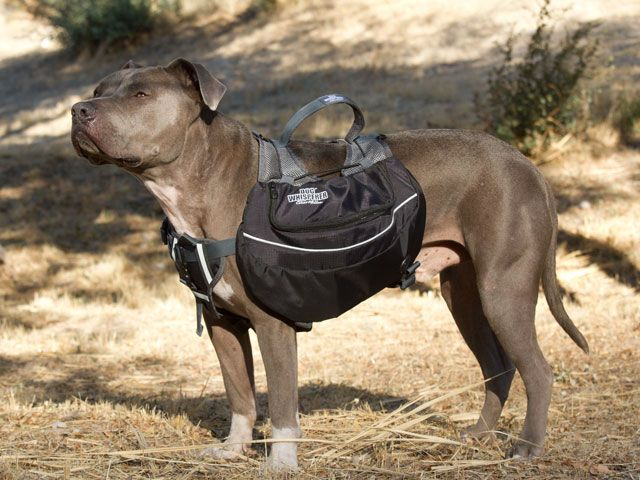 ec7c317078483fa31a78d5ebadfeb9e9 dog whisperer dog backpack could sew some bags to add to the dogs