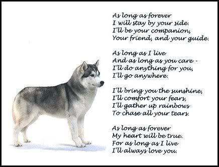 Inspiration For Adopting A Siberian Husky A Great Breed Alaskan
