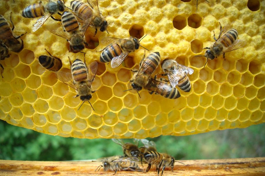 In Search of Spiritual Guidance? Look to the Bees