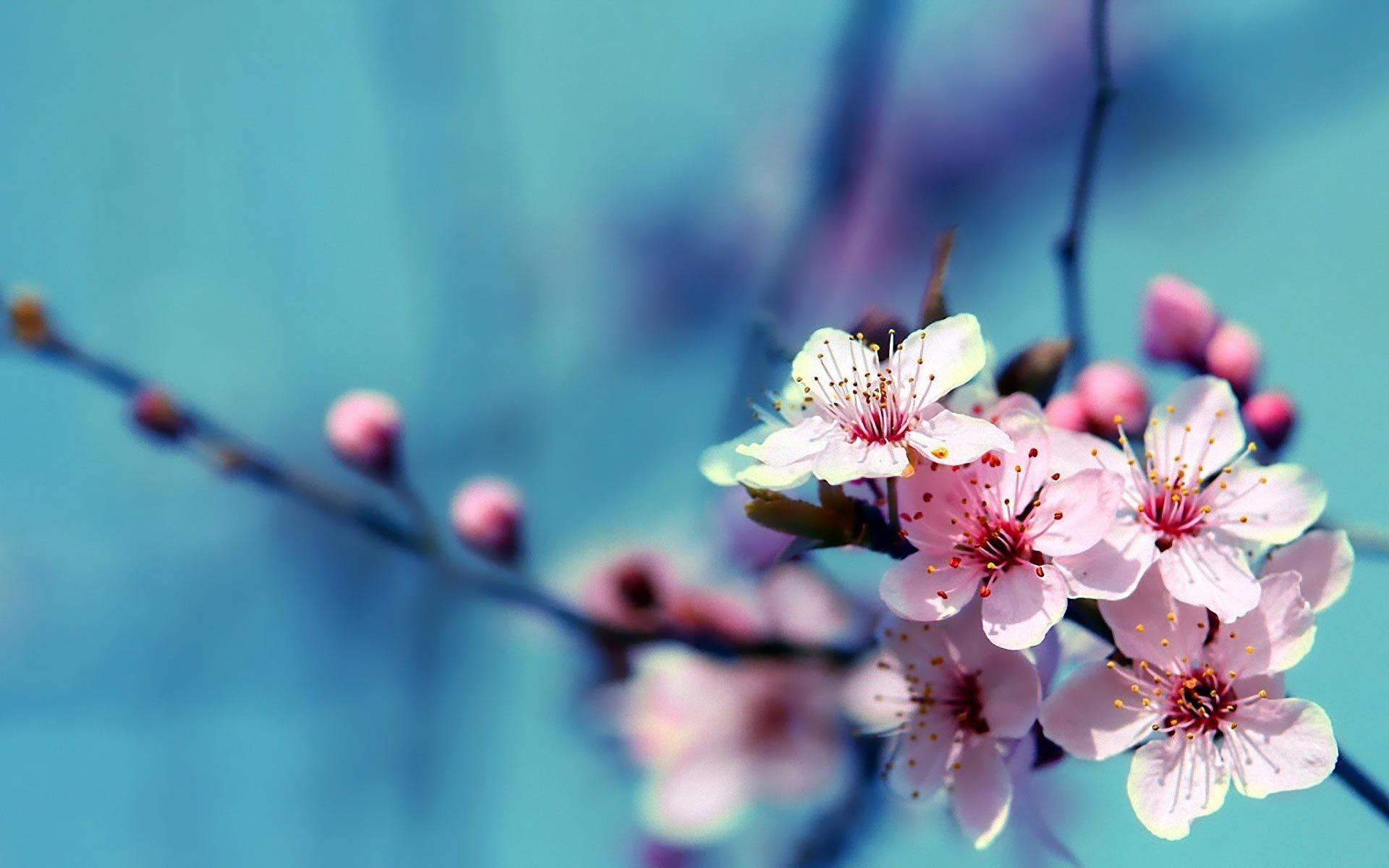 Flower Wallpaper : Find Best Latest Flower Wallpaper In HD