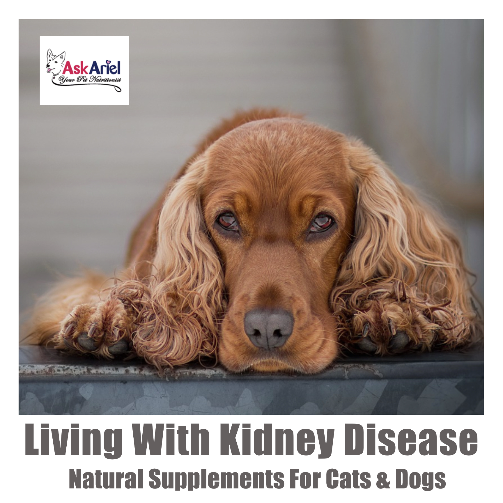 Kidney disease is more common in cats than dogs and often