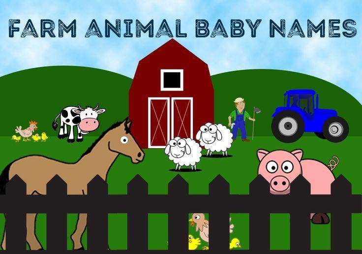 16+ Random animal name generator images