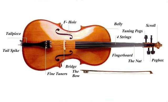 1000 images about all things cello on pinterest artworks  : cello diagram - findchart.co