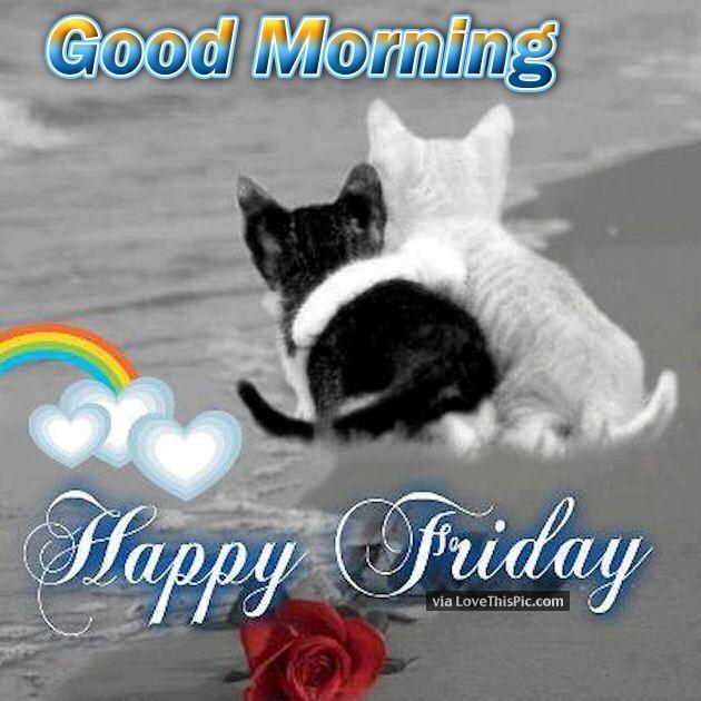 Senior Cat Quotes: Good Morning Happy Friday Cute Quote