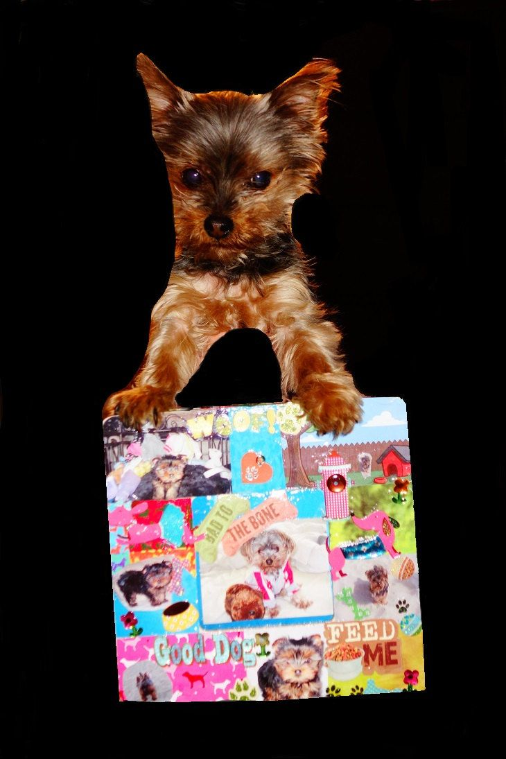 Cute Personalized Dog Picture Frame, 3d photo frames , Gift, Pet ...