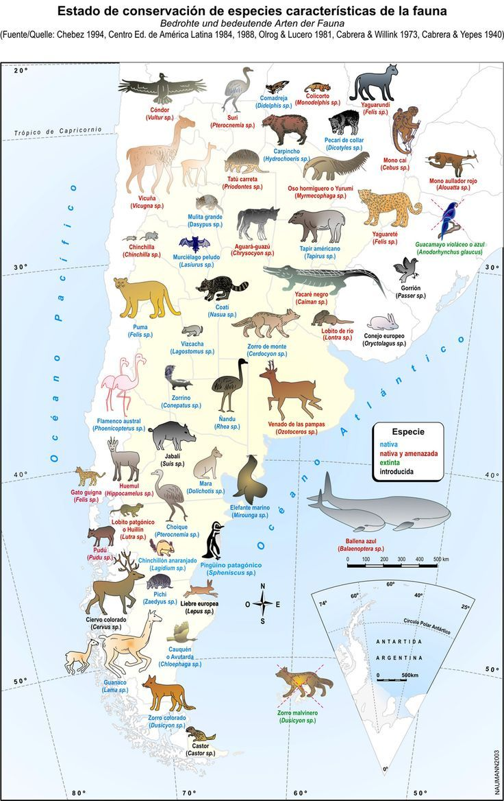 Argentina flora de la fauna de argentina los mapas pinterest argentina gumiabroncs Choice Image