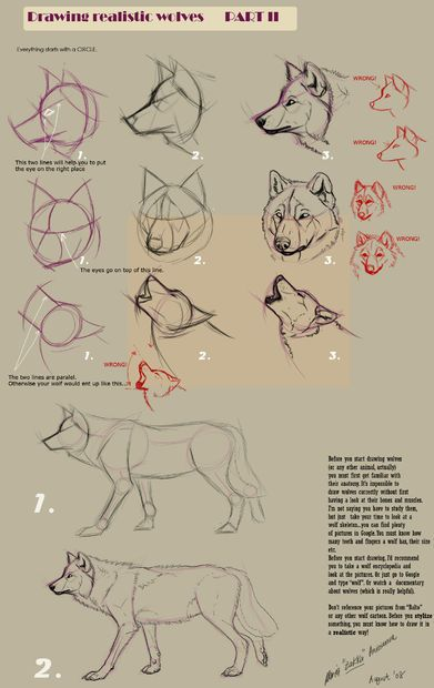 Guides To Drawing Wolves Comment Dessiner Un Loup Croquis De