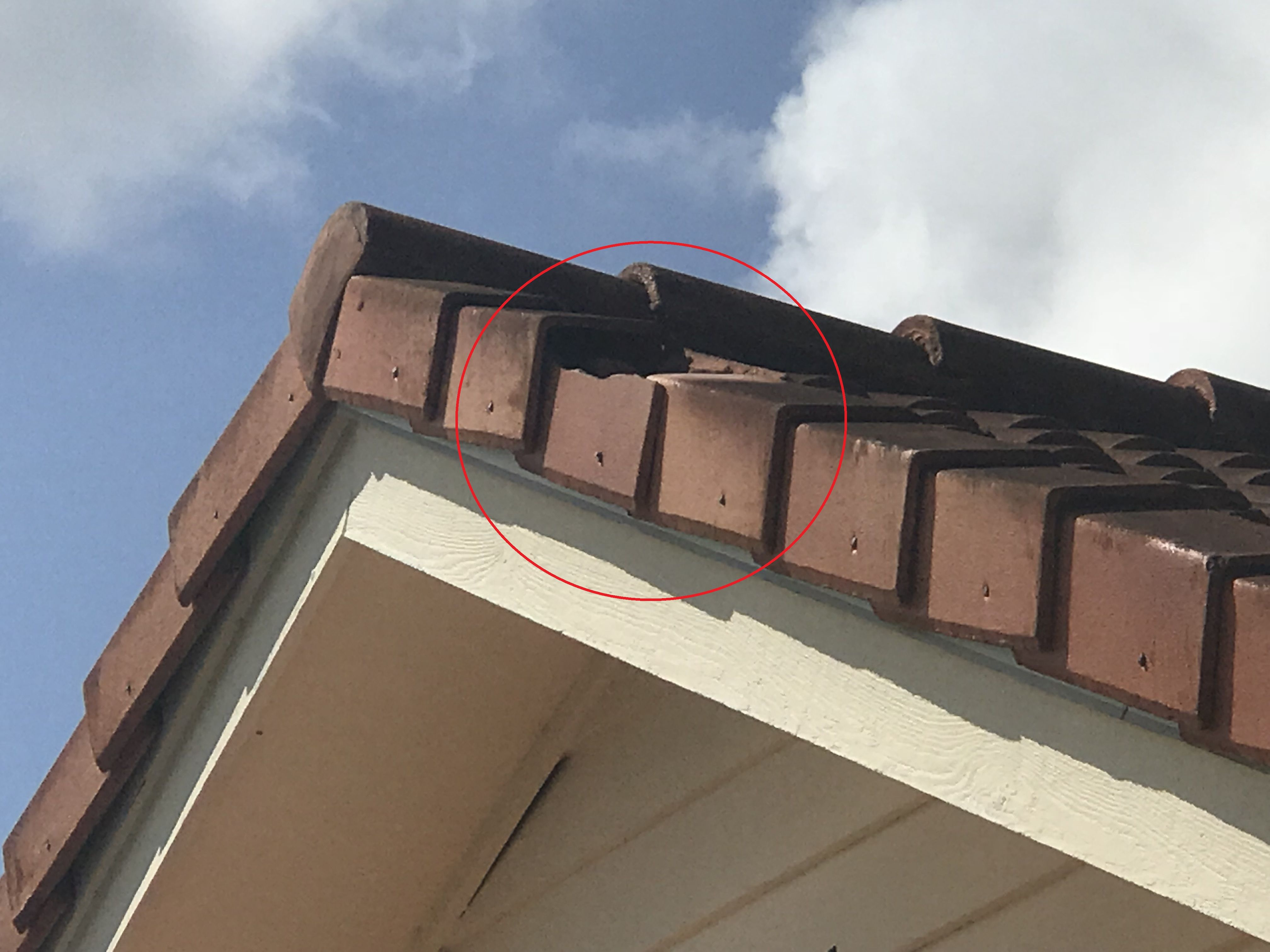We Replaced A Broken Roof Tile On A Home In Palm Beach