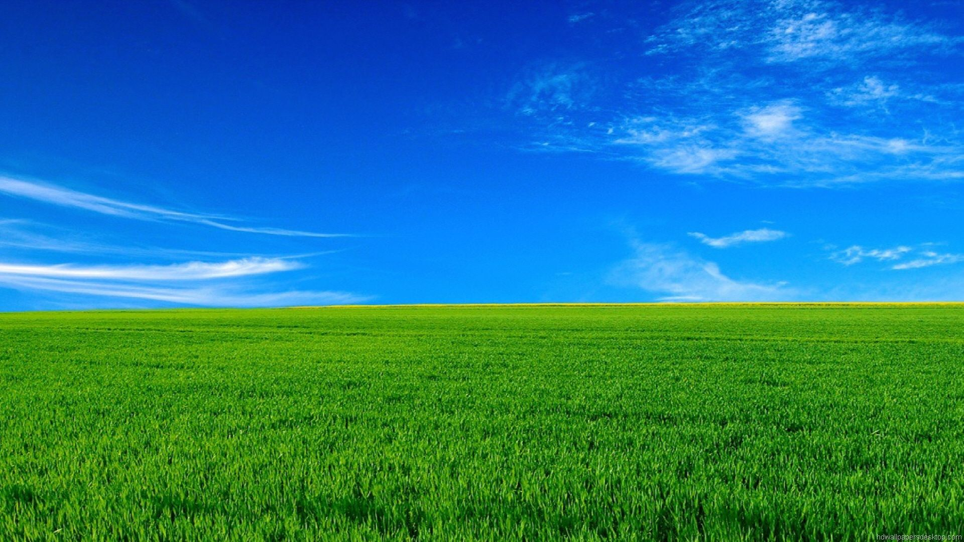 Green Grass Field Wallpapers HD Wallpapers Epic Car