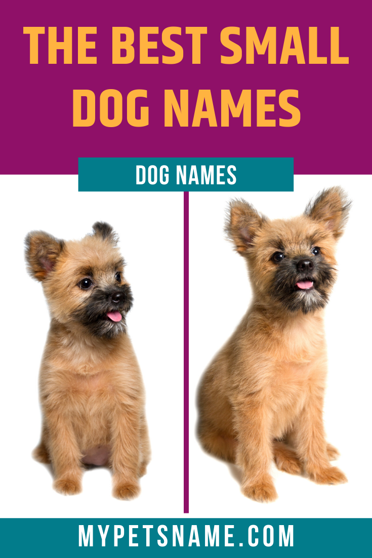 Pictures And Names Of Dogs That Stay Small