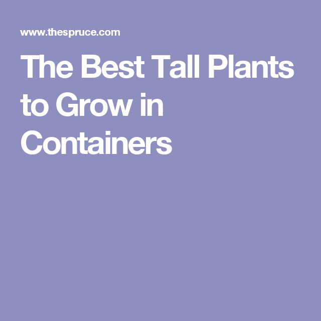 Perfect These Eye Catching Plants Add Height To Your Container Garden